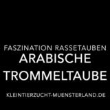 Video: Arabische Trommeltaube und ihr Flugstiel